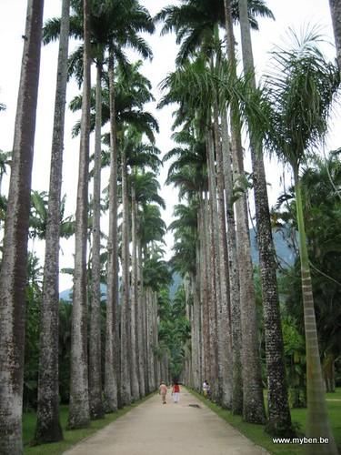 Rio de janeiro jardin botanique explore for Jardin botanique 78