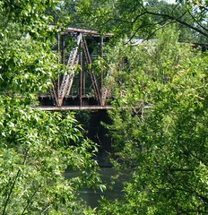 rainforest, canopy walkway, green, forest, natural environment, jungle, bridge,