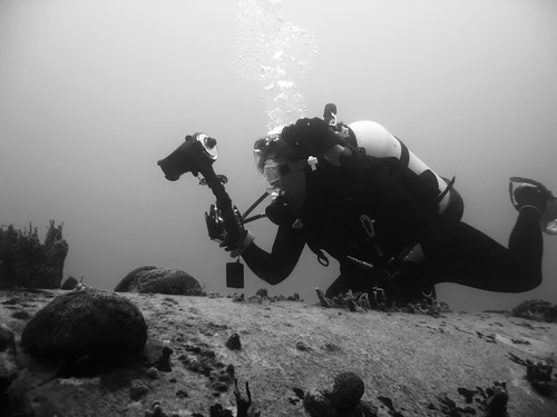 Nekton Rorqual 2009, Jessica shooting over the habitat