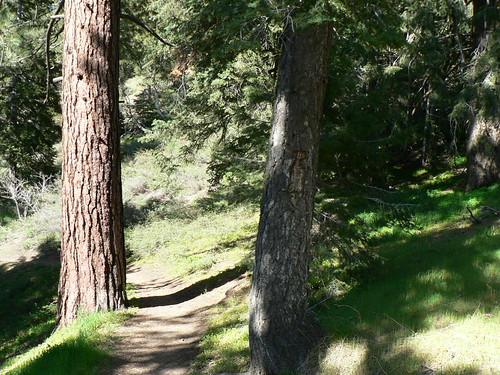 McGill Trail No. 4