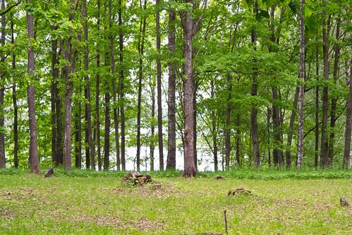 trees cemetery latvia daugava lielvārde kapsēta dīķi aveniņi