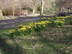 Springtime in Vernon Park, Stockport - 11-3-14...