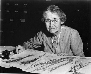 Mary Agnes Chase (1869-1963), sitting at desk with specimens