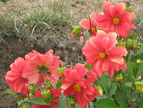 Las flores mas hermosas del mundo taringa for Las plantas mas bonitas