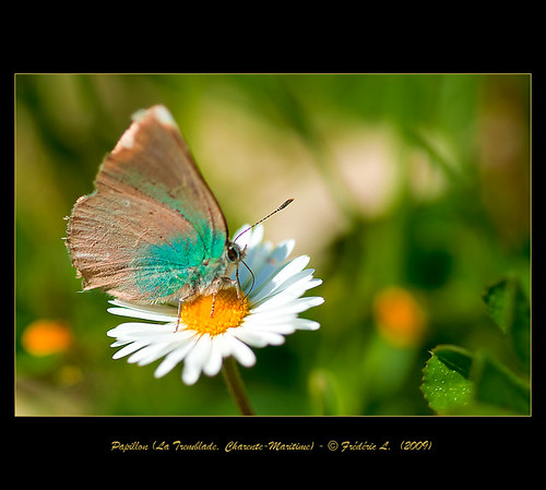 Un Petit Papillon - A Little Butterfly (3)