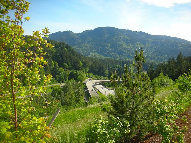 Multi-Use Trail in Issaquah Highlands