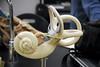 BIO 120 Lab Inner Ear 001 by djneight