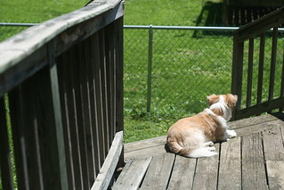 One Dog Porch