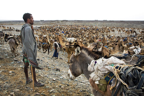 caravan ethiopia danakil abigfave littlestoriespicswithsoul garcìamarquez ilgeneralenelsuolabirinto ahmedela