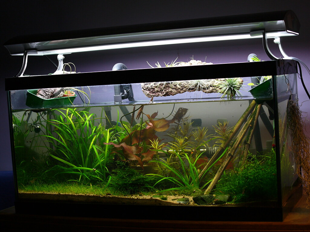 Freshwater fish tank equipment - Photo By Flickr User Threefingeredlord