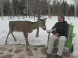 Mom Feeding a Deer