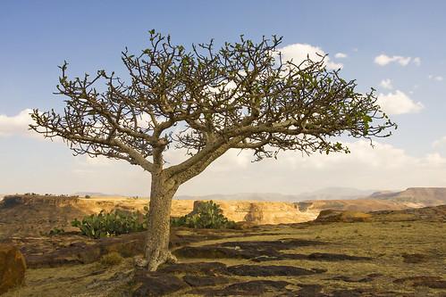 africa ethiopia amba naturesfinest mywinners abigfave aplusphoto treesubject overtheexcellence theperfectphotographer natureselegantshots vanagram thebestofmimamorsgroups debredamomonastry