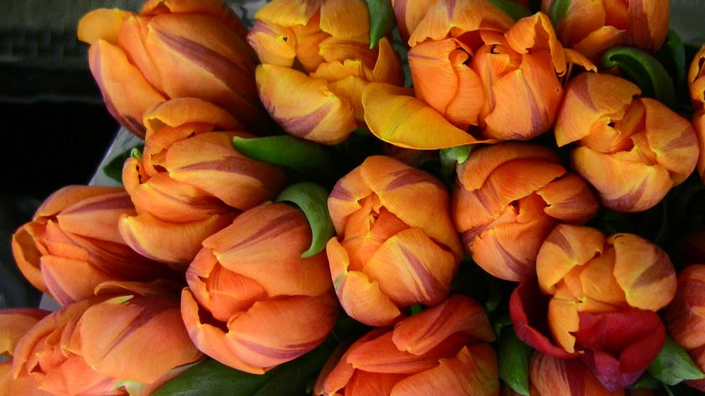 Tulpen in Amsterdam - 5/237
