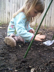 Madeline planting the pole beans