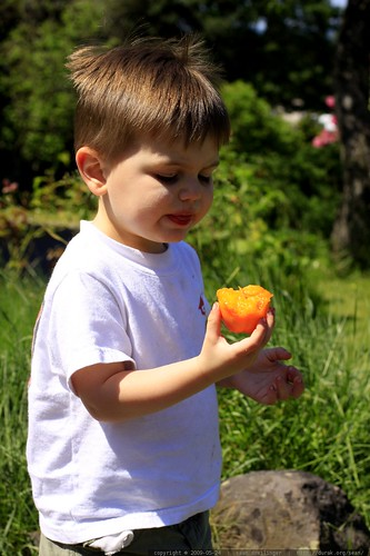 eating an apricot on the way home from the store