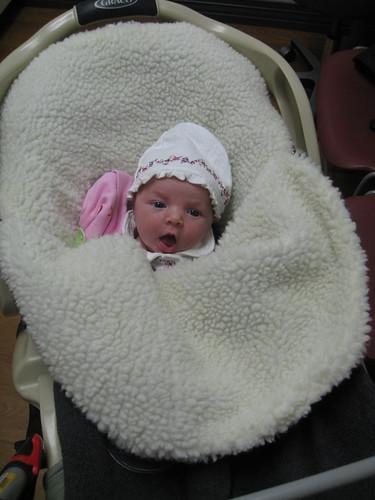 Lilah (2 weeks old)