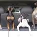 traveling buddies (wild) by roadsidenut (RoadsideArchitecture.com)
