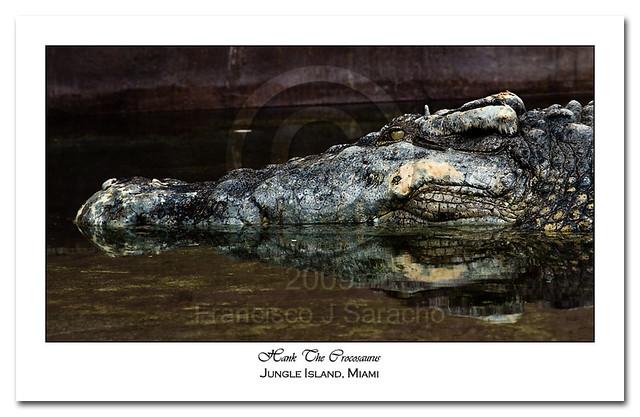Quão grande pode ser? - Crocodilianos gigantes 3381315592_7043feb230_z