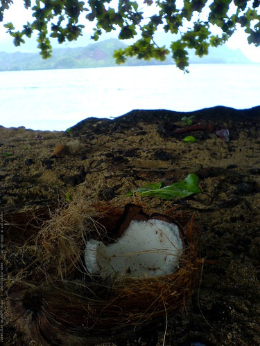 open coconut on the beach near the princeville hotel   DSC01822