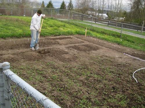 snohomish, tim, gardening, garden, fence, d… IMG_1827