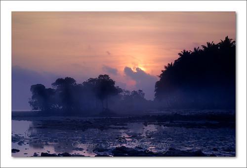 travel trees india mist holiday color colour water silhouette fog sunrise nikon tour soe havelock andaman d80 abigfave