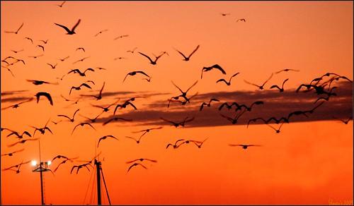 sunset sun skyline tramonto nuvole estate porto cielo tramonti gabbiani cartolina siluette cattolica rivieraadriatica rivieraromagnola colorphotoaward glaucos estremità rossoarancio platinumheartaward cittàdicattolica marinadicattolica darsenadicattolica allegrisinasceosidiventa ☼ilfilodarianna