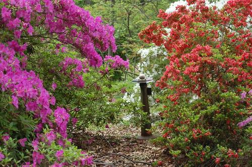 Oaklawn Garden, Germantown, Tenn.
