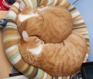 Gingers in desk cat bed