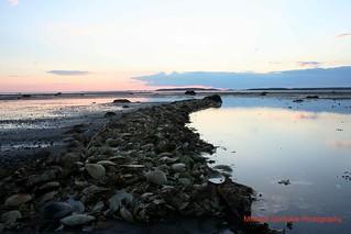 Oyster Nest