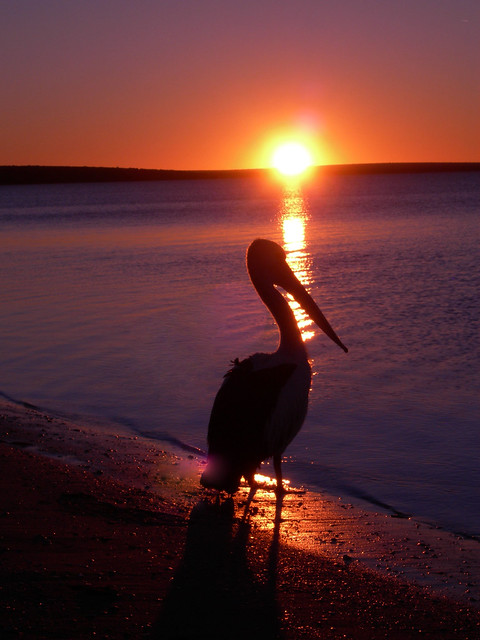 sunset in monkey mia-western australia