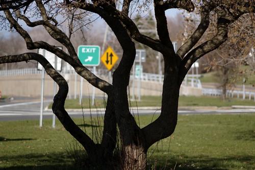 Tree Tangle