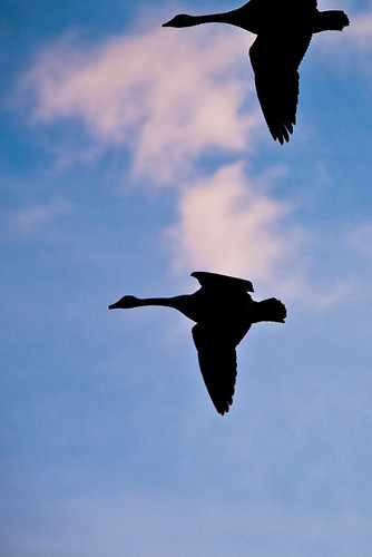 sunrise geese photoblog2009