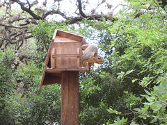 Squirrel - Not Just for Breakfast Any More