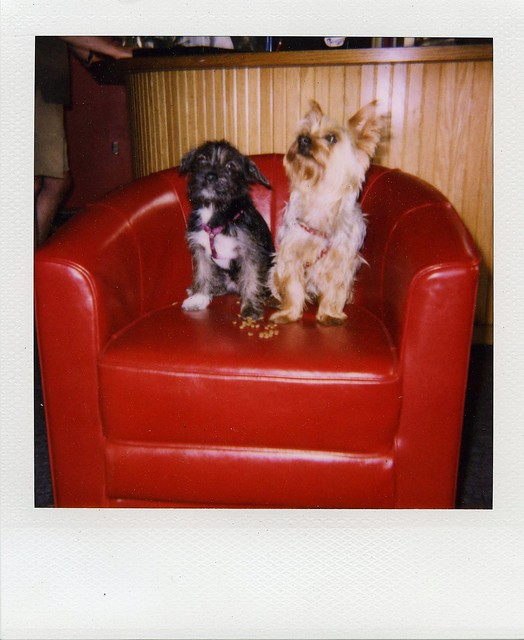 garage dogs two