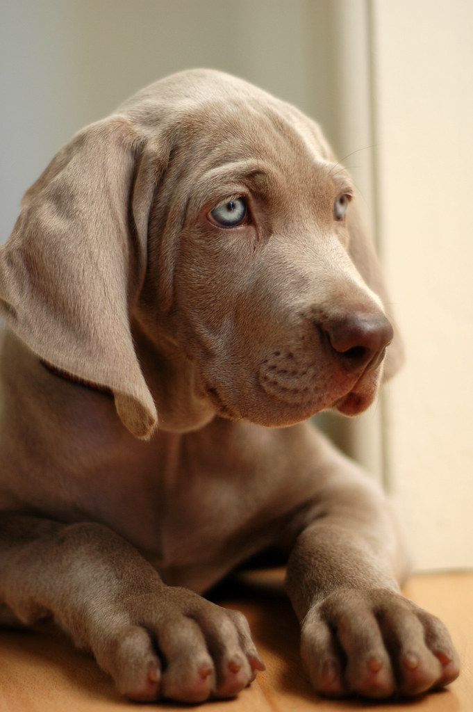 Ruffle A Dog S Ears