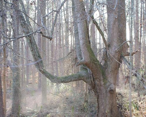 fog effect sonyalpha300 crabapplega treeforestlandscape earthshareofgeorgia09