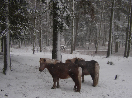 ponys in the park