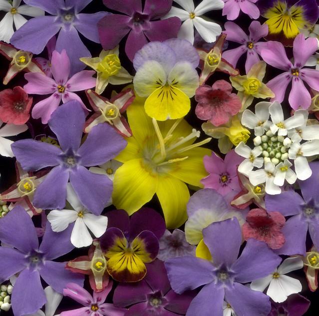05571 Bouquet 741
