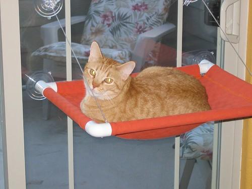 just cats little emma window seats. Black Bedroom Furniture Sets. Home Design Ideas