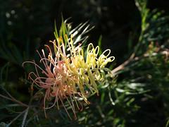 Mt Annan Botanic Gardens