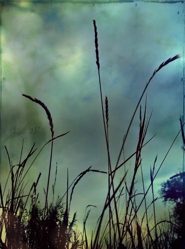 blue trees sunset sky texture nature grass silhouette clouds landscape spring serbia brushes monday tisa hmb vojvodina srbija banat bluemood happymondayblues happybluemonday kristinavf