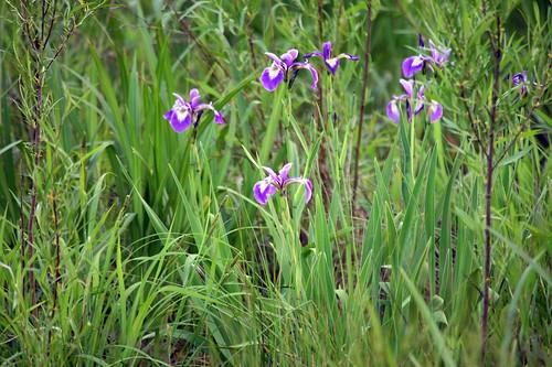 flower landscape illinois