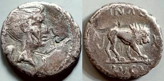 489/5 #9255-17 ANTONI IMP IIIVIR Mark Antony Fulvia Lion Quinarius
