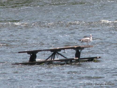 Refuge in the River