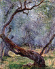 W 868 - Claude Monet: Study of Olive trees (1884) by petrus.agricola