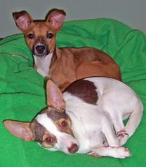 20070922.Tunie & Atticus2