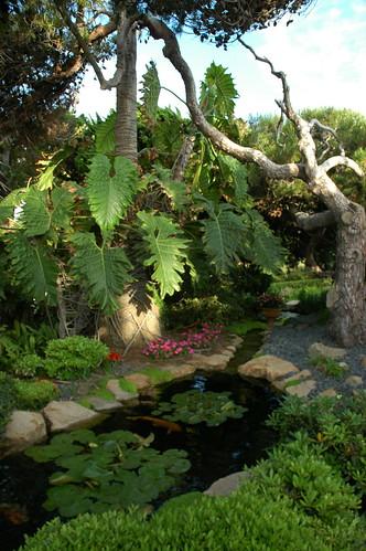 Rivelet Koi Pond, Meditation Garden - Self-Realization Fellowship by Wonderlane