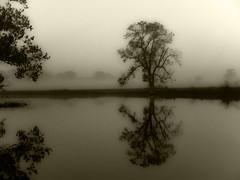 lone tree copy