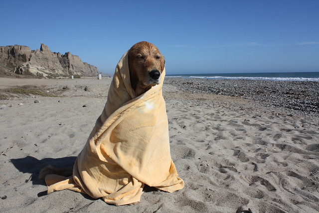 codi goes beach camping