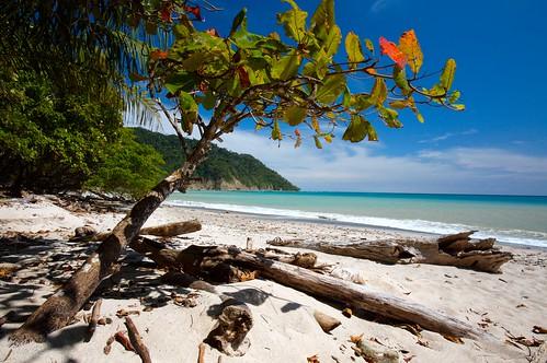 tree sp? on white sand beach, Playa Cabo Blanco/ Cabo Blanco National Park, Nicoya Peninsula/ Costa Rica/IMG_0986.CR2